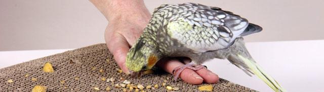 ninfas alimentacion durante la cria