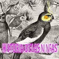 historia de as ninfas